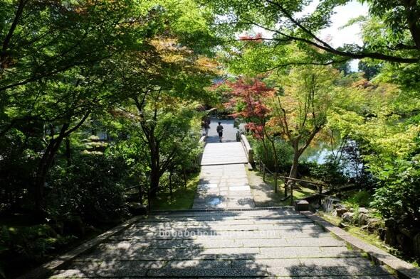 ใบไม้แดงเกียวโต