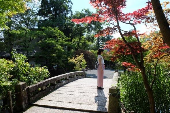 ชมใบไม้แดงเกียวโต