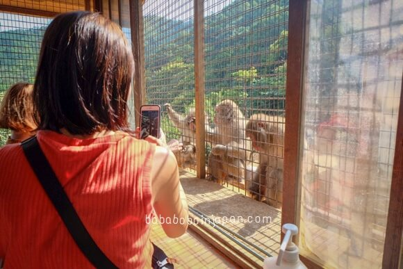 Monkey Park Kyoto