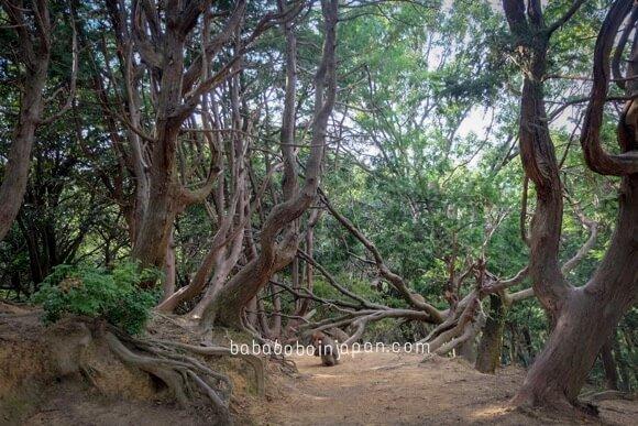 สวนลิง อาราชิยาม่า