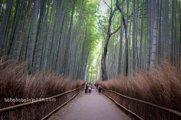 ป่าไผ่อาราชิยาม่าเกียวโต