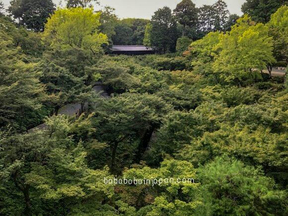 เที่ยวเกียวโต ใบไม้เปลี่ยนสี