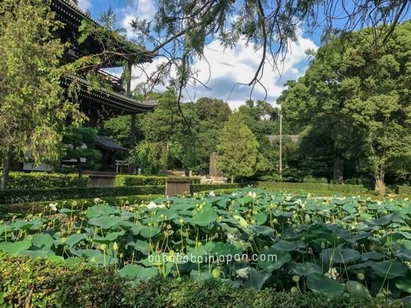 เที่ยวญี่ปุ่น สวนบัว