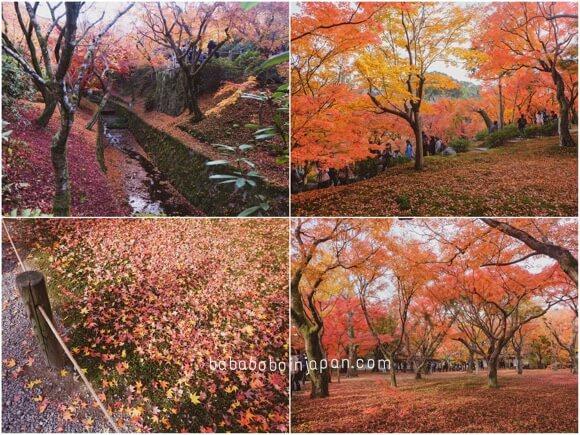 เกียวโต ใบไม้แดง