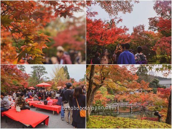 เกียวโต จุดชมใบไม้เปลี่ยนสี