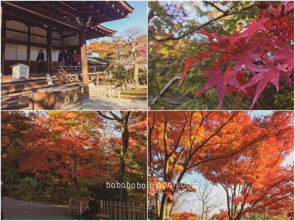 เกียวโต ชมใบไม้เปลี่ยนสี