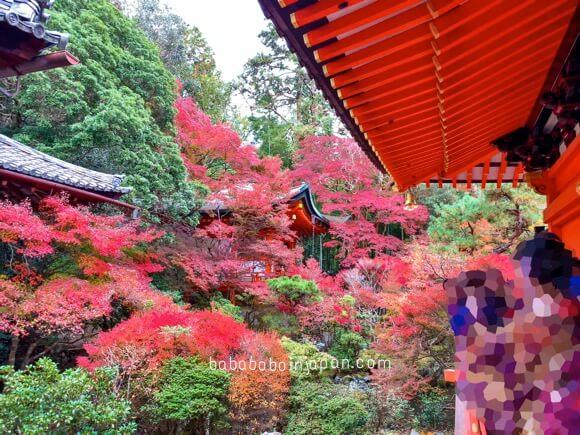 ใบไม้เปลี่ยนสีที่บิชามอนโต