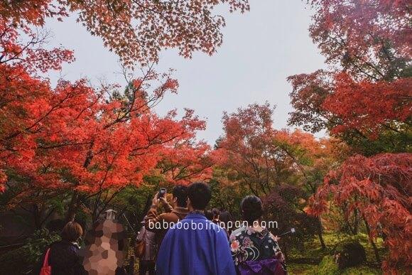 โทฟุคุจิ ใบไม้แดง