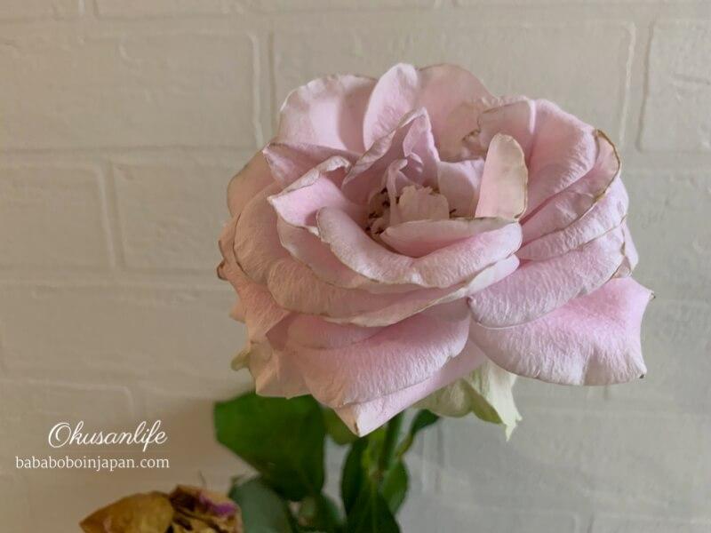 น้ำยายืดอายุดอกไม้